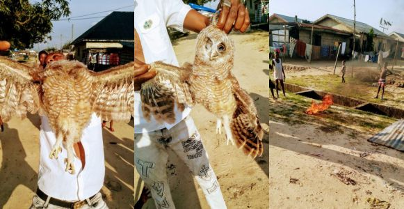See What Happened To A Suspicious Owl In Delta Community (Photos)